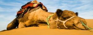istock-camel-blog-ready-593x-225-new